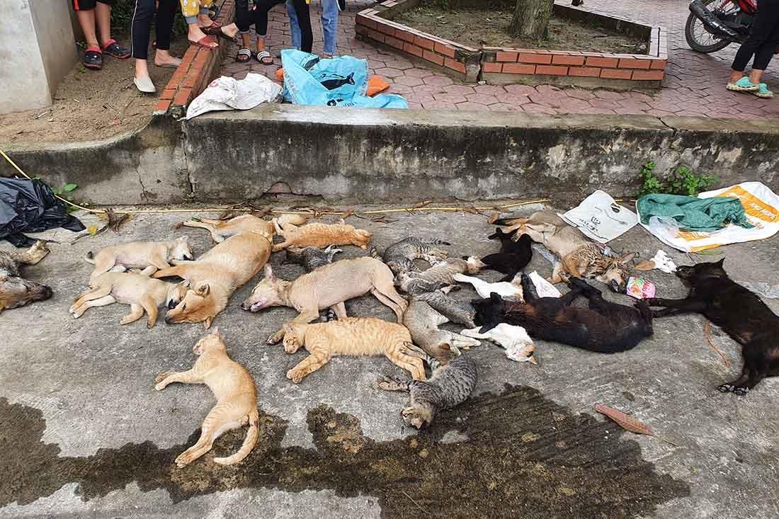 Vụ gần 30 con chó, mèo bị trúng bả chết ở Nghệ An: Vây bắt 2 anh em nghi phạm - Ảnh 1