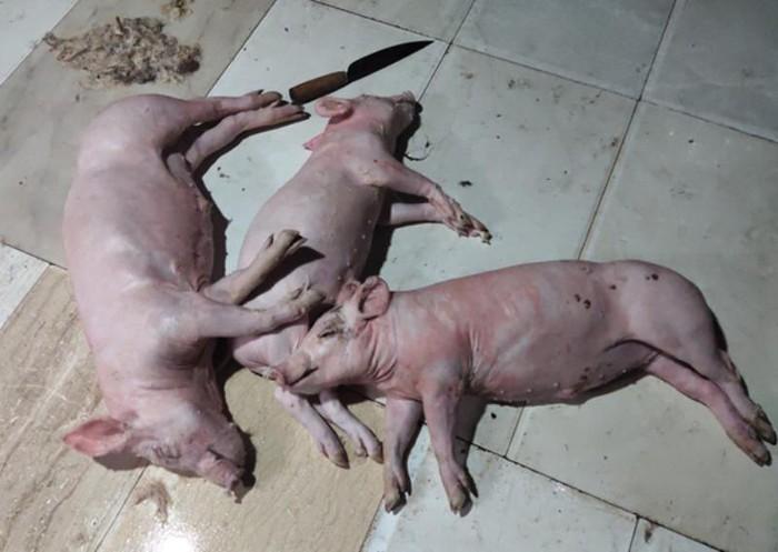 Lời khai của người đàn ông mua 3 con lợn chết về quay bán cho khách - Ảnh 2