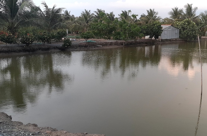 Đàn cá Koi 200 con chết bất thường, công an vào cuộc điều tra - Ảnh 2