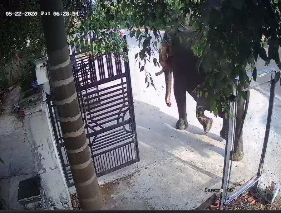 Người đàn ông tử vong vì bị voi nhà bất ngờ tấn công - Ảnh 1
