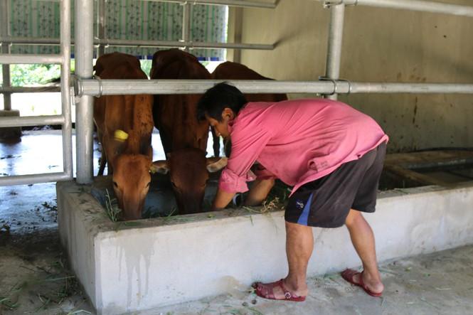 Choáng ngợp những chuồng bò khang trang có tổng trị giá hơn chục tỷ đồng ở Nghệ An - Ảnh 10
