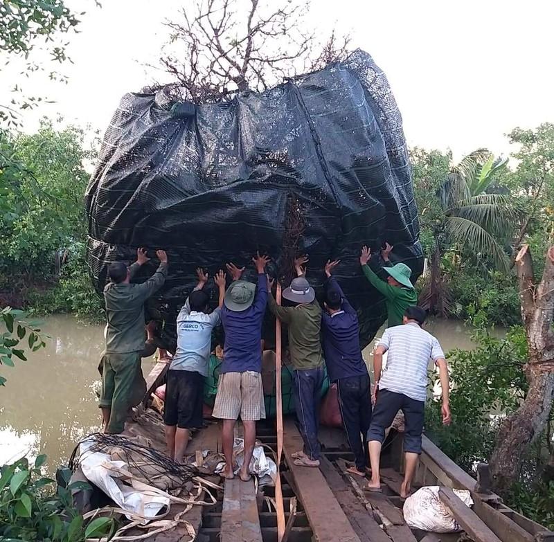 """Đại gia chi 3,8 tỷ đồng mua cây mai vàng """"siêu khủng"""" ở làng mai Phước Định là ai? - Ảnh 3"""