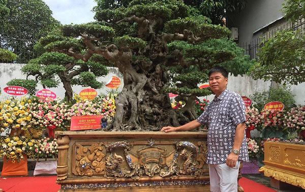 """Chiêm ngưỡng cây sanh cổ """"Tiên lão giáng trần"""" được đại gia Phú Thọ chi 28 tỷ mua về - Ảnh 1"""