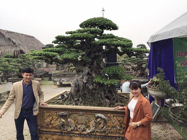 """Chiêm ngưỡng cây sanh cổ """"Tiên lão giáng trần"""" được đại gia Phú Thọ chi 28 tỷ mua về - Ảnh 5"""