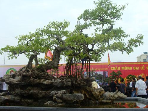 """Chiêm ngưỡng dàn cây cảnh hơn 150 tỷ đồng của đại gia Thịnh """"đồng nát"""" - Ảnh 1"""