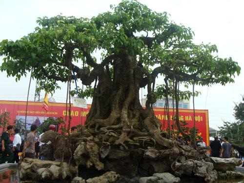 """Chiêm ngưỡng dàn cây cảnh hơn 150 tỷ đồng của đại gia Thịnh """"đồng nát"""" - Ảnh 3"""
