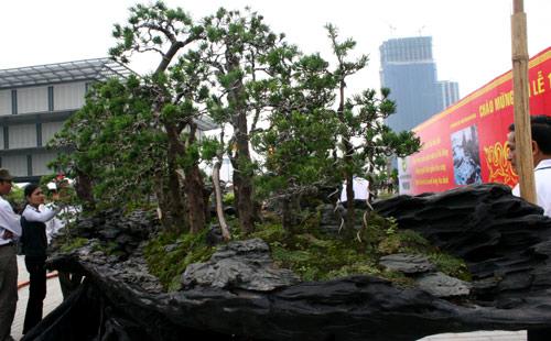 """Chiêm ngưỡng dàn cây cảnh hơn 150 tỷ đồng của đại gia Thịnh """"đồng nát"""" - Ảnh 8"""