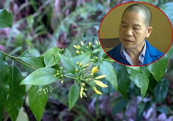 Thiếu tá công an tiết lộ hành trình phá vụ dùng lá ngón đầu độc 5 người ở Tuyên Quang - Ảnh 2