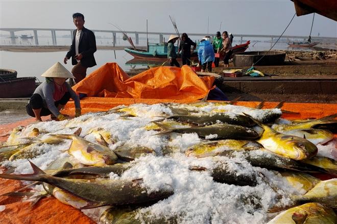 Trúng đậm mẻ cá chim vàng, ngư dân thu được 600 triệu đồng trong một đêm - Ảnh 1