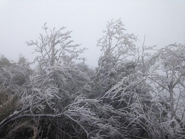 Nhiệt độ xuống -2 độ C, Cao Bằng, Lạng Sơn băng giá phủ kín nhiều nơi - Ảnh 1