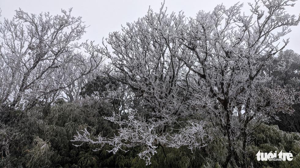 Nhiệt độ xuống -2 độ C, Cao Bằng, Lạng Sơn băng giá phủ kín nhiều nơi - Ảnh 8