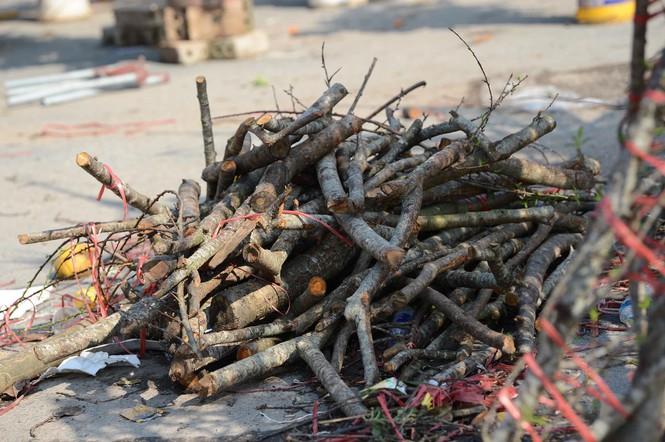 """Tiếc nuối cành đào """"ế"""" biến thành củi khô trên vỉa hè chiều 30 Tết - Ảnh 1"""