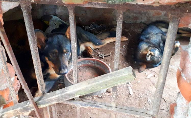 Chủ đàn chó dữ cắn bé trai 7 tuổi tử vong khẳng định không cho đàn chó ăn thịt sống - Ảnh 1