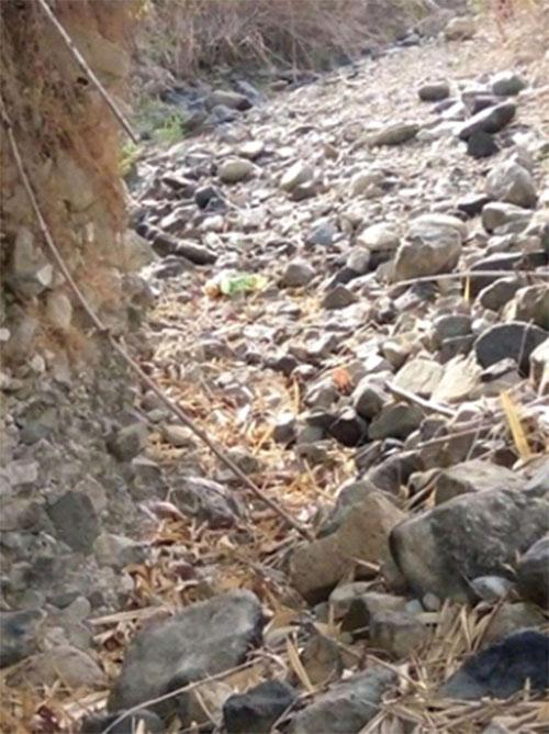 Vụ bé trai 2 tuổi chết bí ẩn ở Bình Thuận: Chú chó đi theo cậu chủ suốt 2 ngày - Ảnh 1