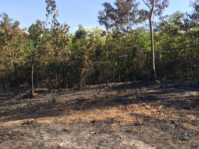 Phát hiện thi thể cụ ông 88 tuổi sau khi dập tắt đám cháy rẫy rộng 700 m2 - Ảnh 1