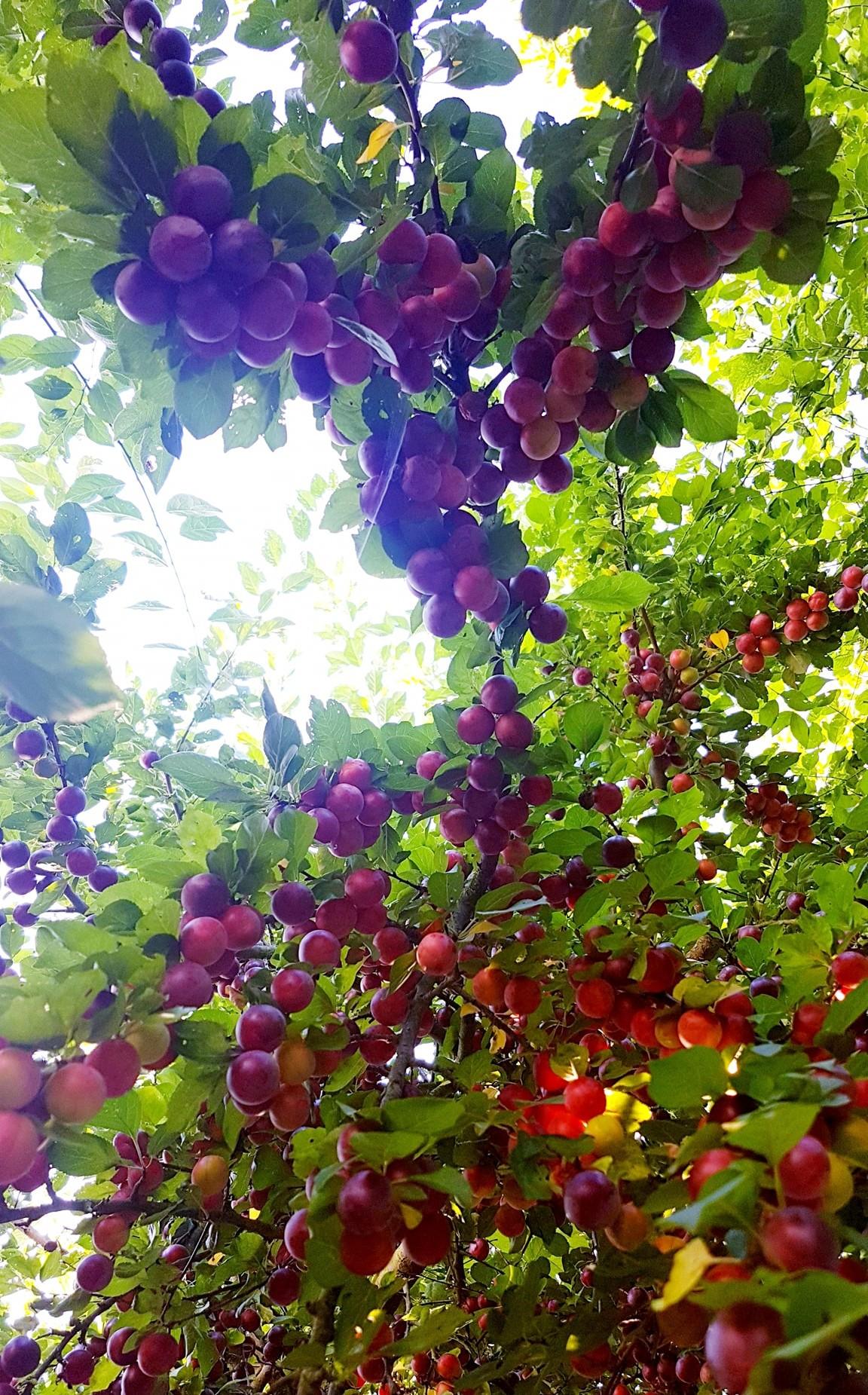 """""""Lạc lối"""" giữa vườn hồng đẹp như tranh vẽ của cô giáo người Việt tại Đức - Ảnh 10"""