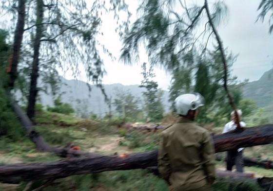 Vụ thi thể người đàn ông ở rừng dương: Tay nạn nhân cầm cưa - Ảnh 1