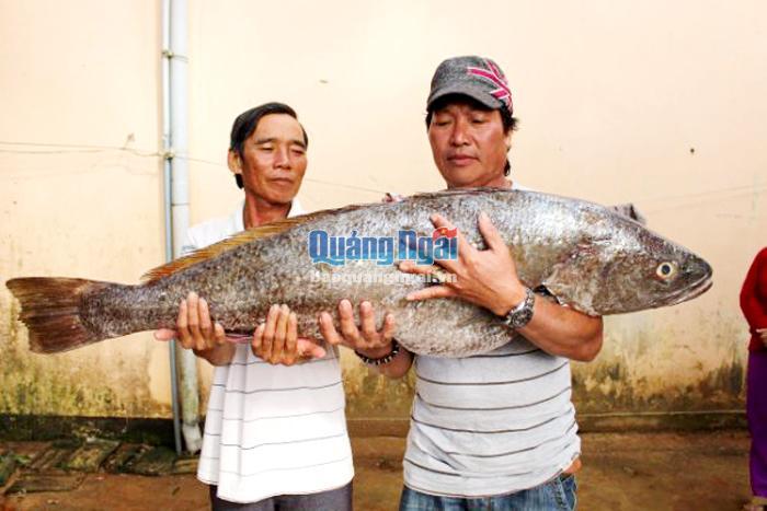 Bắt được cá lạ nặng 18 kg, dài 1 mét nghi sủ vàng quý hiếm - Ảnh 1