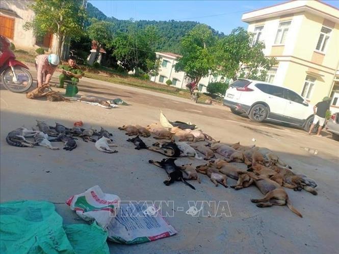 Thấy chó mèo nằm chết la liệt trên đường, dân mật phục bắt đôi nam nữ thả bả độc - Ảnh 1