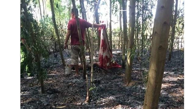 Vụ dập lửa rừng keo, kinh hãi phát hiện thi thể người: Nạn nhân là ai? - Ảnh 1