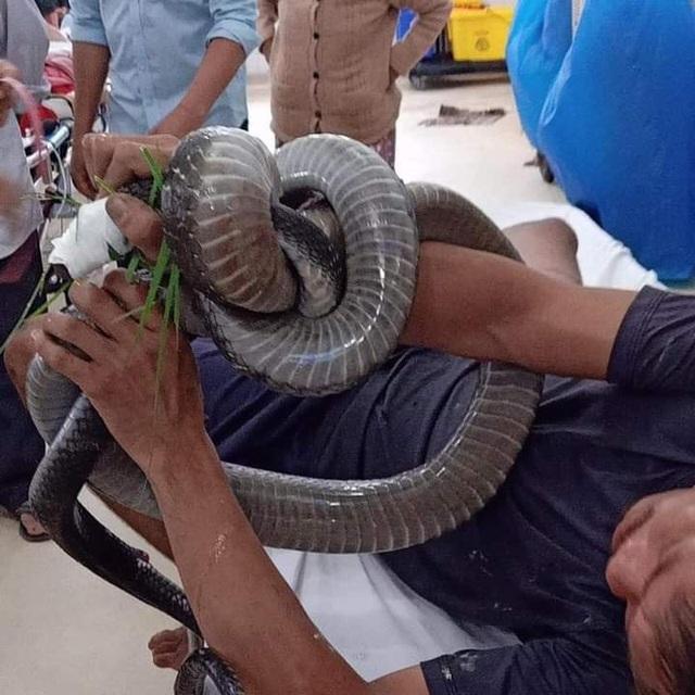 """Vụ mang rắn hổ mang chúa """"khủng"""" gần 5kg đến bệnh viện: Sức khỏe bệnh nhân ra sao? - Ảnh 1"""