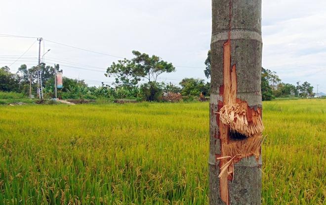 Hiện trường ám ảnh vụ cô gái gục chết sau tiếng nổ: Thủng thân cây, đứt dây điện cao thế - Ảnh 2