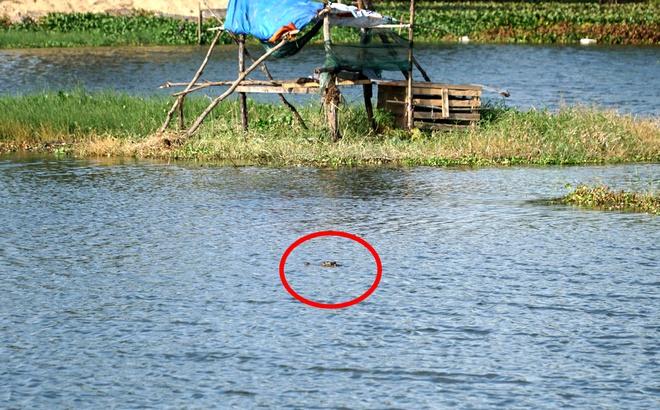 """Xuất hiện cá sấu """"khủng"""" giữa hồ nước ở Vũng Tàu: Nổi lên 3 lần trong 15 phút - Ảnh 1"""