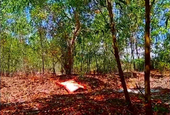Kinh hãi phát hiện thi thể treo cổ trong rừng tràm: Trưng cầu giám định tử thi - Ảnh 1