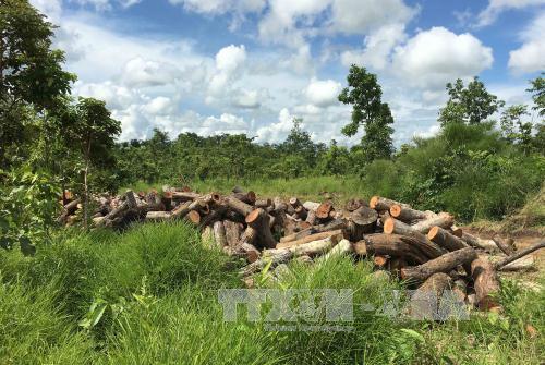 Kiểm điểm trách nhiệm cá nhân, tập thể vụ khai thác gỗ trái phép tại Đắk Lắk - Ảnh 1