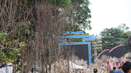 Du khách háo hức đón Lễ hội hoa anh đào ở Hà Nội - Ảnh 13