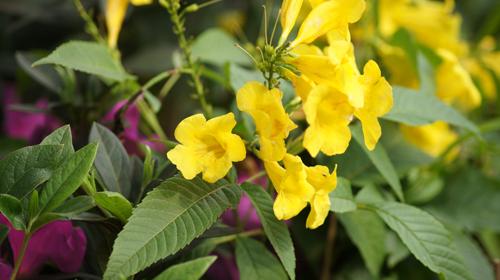 Du khách háo hức đón Lễ hội hoa anh đào ở Hà Nội - Ảnh 14