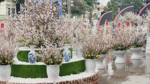 Du khách háo hức đón Lễ hội hoa anh đào ở Hà Nội - Ảnh 3