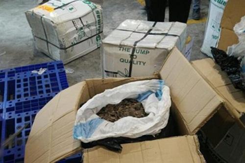 Hải quan bắt giữ số lượng lớn vảy tê tê tại sân bay Nội Bài - Ảnh 1