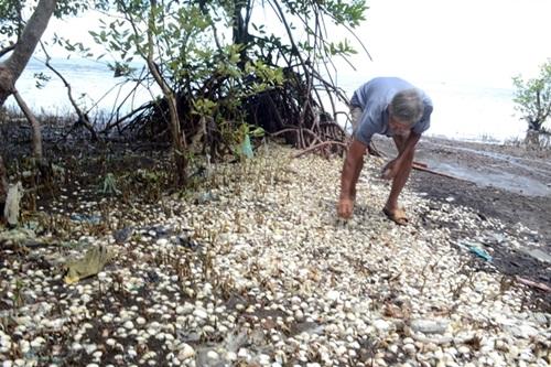 Nguyên nhân khiến cá chết bất thường ở Kiên Giang - Ảnh 1