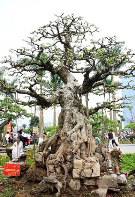"""Chiêm ngưỡng những """"siêu cây cảnh"""" có giá hàng trăm tỷ đồng - Ảnh 8"""