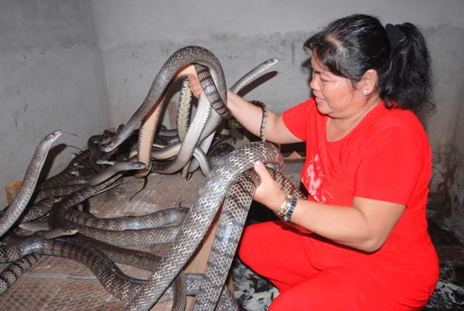 Người nuôi hàng trăm con rắn dưới đám lục bình, kẻ cho bò lổm ngổm trên sàn nhà - Ảnh 3