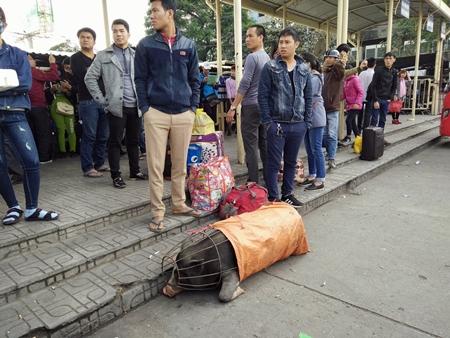 Hàng trăm người nháo nhác tìm đường về quê vì nhà xe bỏ chuyến tại bến Mỹ Đình - Ảnh 4