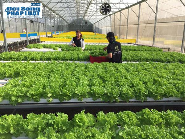Vườn rau hữu cơ cho thu nhập 350 triệu/tháng của đạo diễn trẻ - Ảnh 9