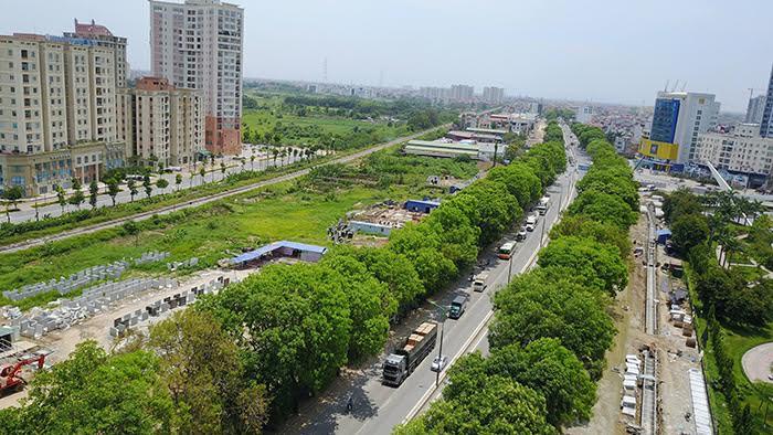 Hà Nội: Đề nghị xem lại kế hoạch di chuyển 1.300 cây xà cừ - Ảnh 1