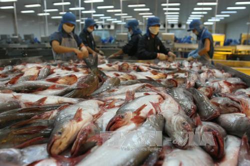 Việt Nam khiếu nại WTO về việc Mỹ áp thuế mặt hàng cá phi lê - Ảnh 1