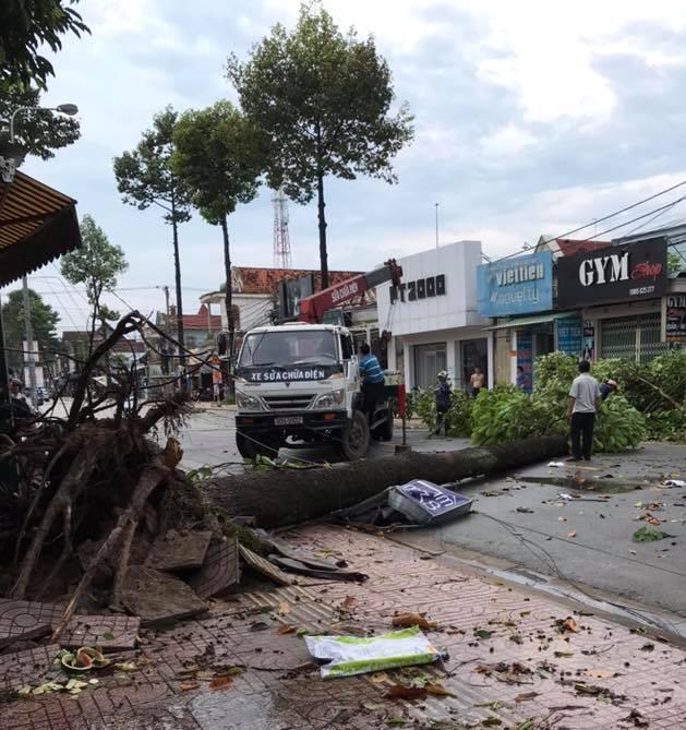 Đồng Nai: Mưa lớn kèm lốc xoáy khiến hàng loạt cây xanh, cột điện gãy đổ - Ảnh 1