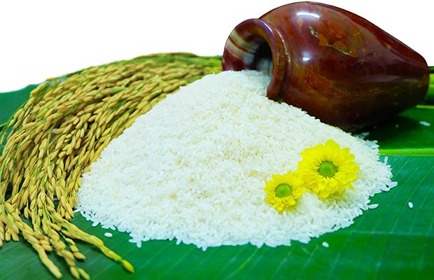 Chuẩn bị công bố Logo Thương hiệu quốc gia Gạo Việt Nam - Ảnh 1