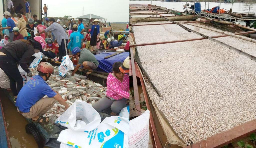 Đồng Nai: Hàng trăm tấn cá chết trắng sông - Ảnh 1