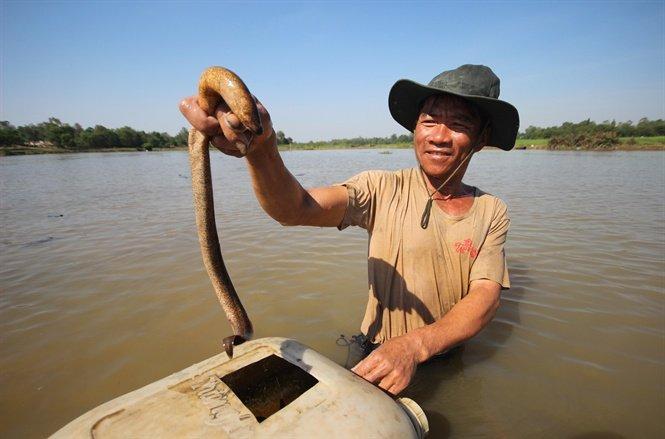 """Mục sở thị tuyệt kỹ bắt lươn của những """"cao thủ"""" ở Quảng Nam - Ảnh 1"""