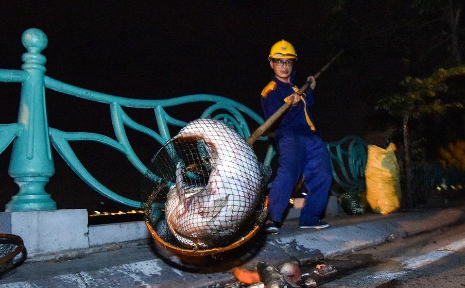 Hà Nội: Hàng trăm công nhân trắng đêm vớt cá chết ở hồ Tây - Ảnh 1