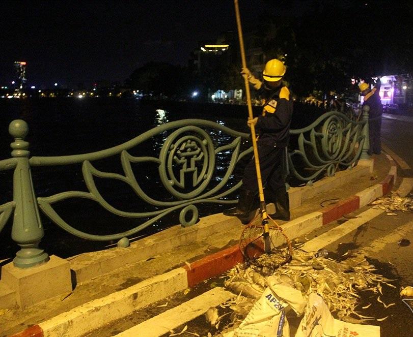 Hà Nội: Hàng trăm công nhân trắng đêm vớt cá chết ở hồ Tây - Ảnh 5