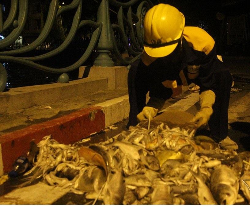 Hà Nội: Hàng trăm công nhân trắng đêm vớt cá chết ở hồ Tây - Ảnh 6