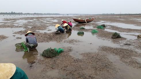 Xác định nguyên nhân khiến hơn 260 tấn ngao nuôi ở Hà Tĩnh chết hàng loạt  - Ảnh 1