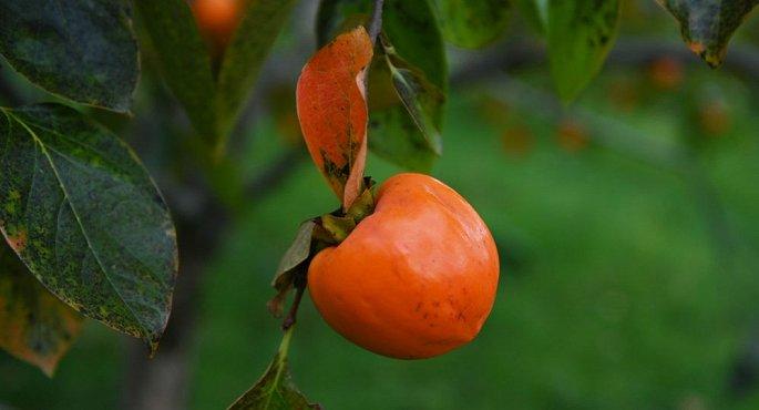 """Hai quả hồng siêu ngọt ở Nhật Bản có giá """"sốc"""" lên tới 150 triệu đồng - Ảnh 2"""