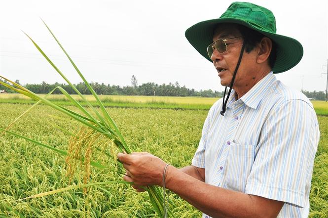 """Gặp """"thần nông"""" Việt ươm mầm hạt gạo ngon nhất thế giới - Ảnh 1"""